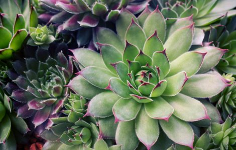 Succulents for Seniors
